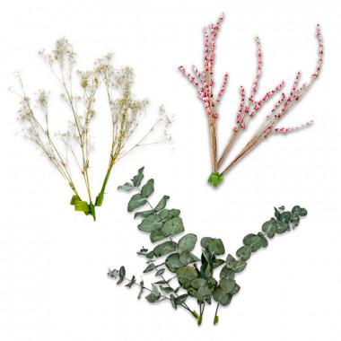 Torkade blommor - eukalyptus, brudslöja och rosa lavendel